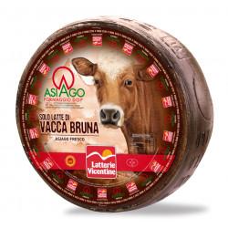 Asiago DOP vacca bruna